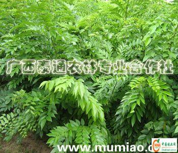 名贵木材树种图片图片大全 名贵木材排名图片