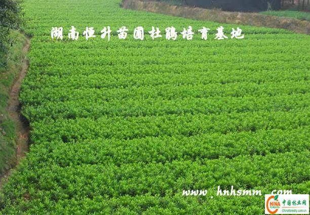 壁纸 成片种植 风景 植物 种植基地 桌面 612_425