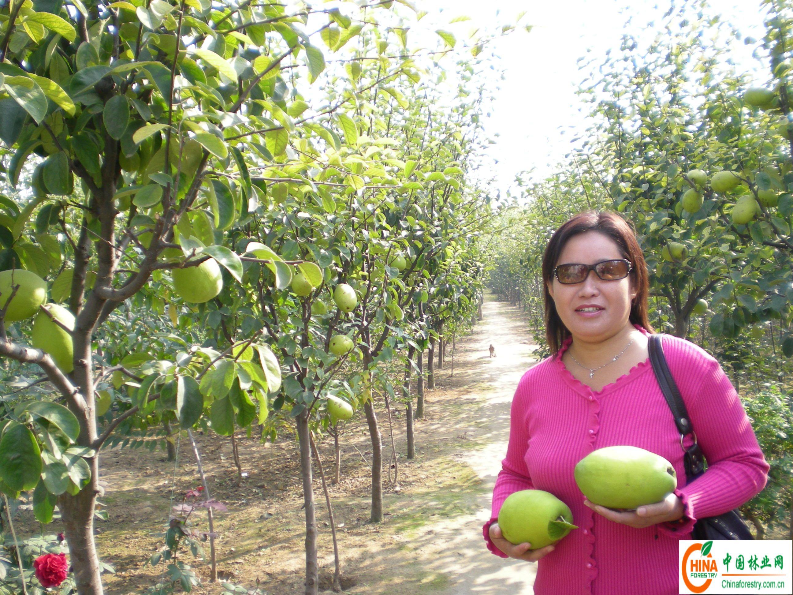 供应信息 产品名称 绿化极品-天香木瓜树-->中国林业