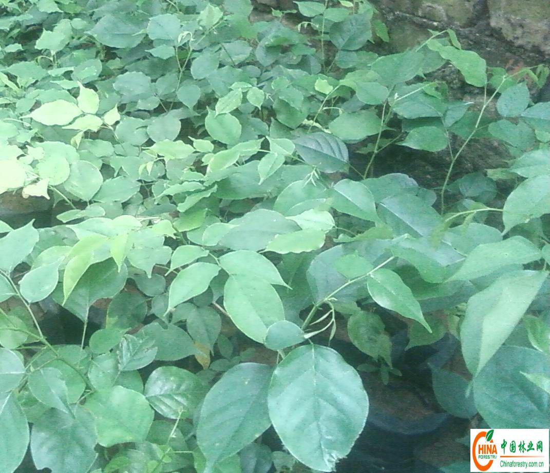 背景 壁纸 绿色 绿叶 树叶 植物 桌面 1071_922