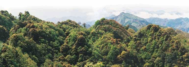 仙鹤坪自然保护区,原始森林遮天避日,绿树修竹迷漫山谷,是黔西南