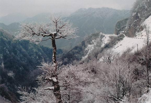 森林旅游 米仓山森林公园-->中国林业网-->林业